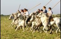 La présentation des cavaliers