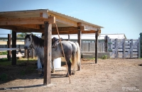 Abri pour les chevaux